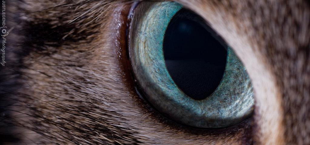 Oeil de Charogne